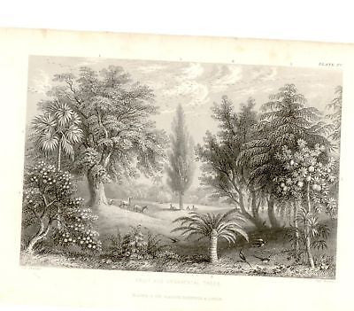 """FRUIT TREES"" by W. Rhind - 1855 - VEGETABLE KINGDOM"
