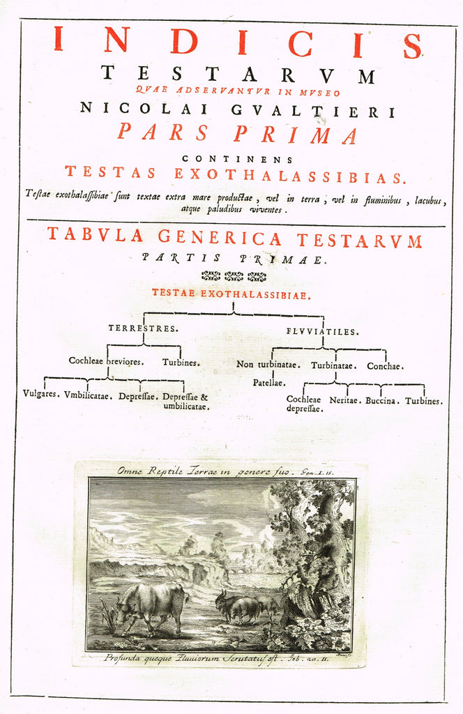 Gualteri's Print - INDEX TESTARUM CONCHYLIORUM - FRONISPIECE - Engraving - 1742