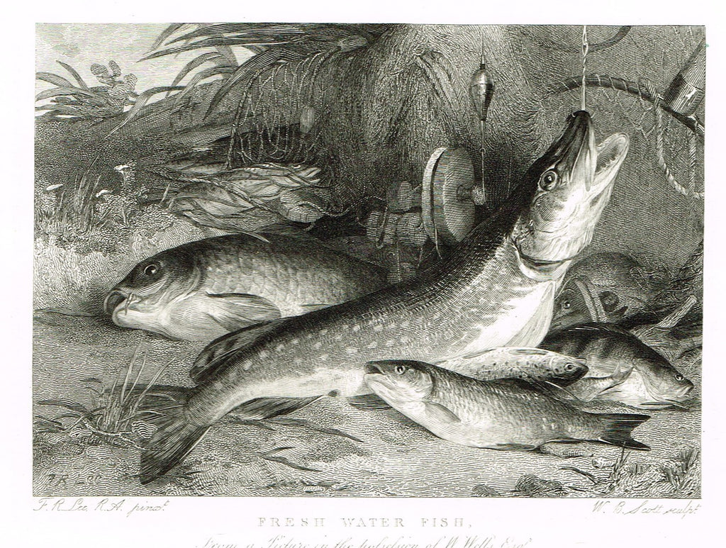 "Ackermann's Sporting Magazine - FISH & FISHING - ""FRESH WATER FISH"" - Steel Engraving - c1838 - Sandtique-Rare-Prints and Maps"