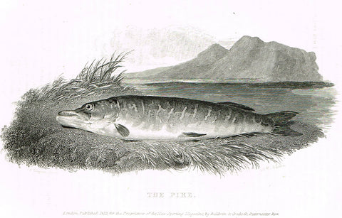 "Ackermann's Sporting Magazine - FISH & FISHING - ""THE PIKE"" - Steel Engraving - c1838 - Sandtique-Rare-Prints and Maps"