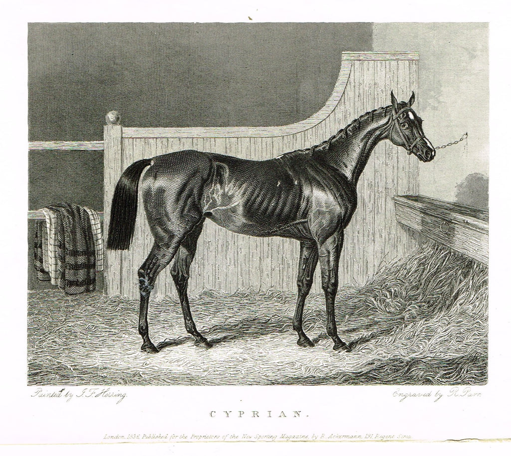 "Ackermann's Sporting Magazine - HORSES - ""CYPRIAN"" - Steel Engraving - c1838 - Sandtique-Rare-Prints and Maps"