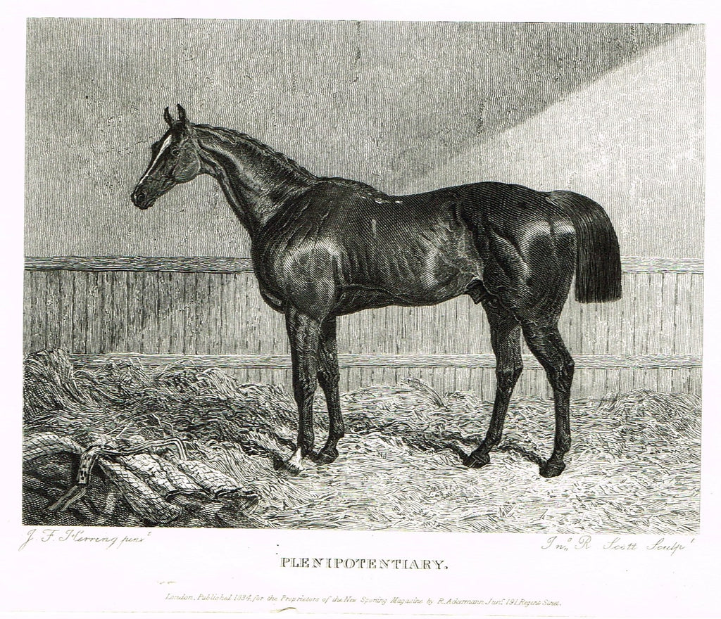 "Ackermann's Sporting Magazine - HORSES - ""PLENIPOTENTIARY"" - Steel Engraving - c1838 - Sandtique-Rare-Prints and Maps"