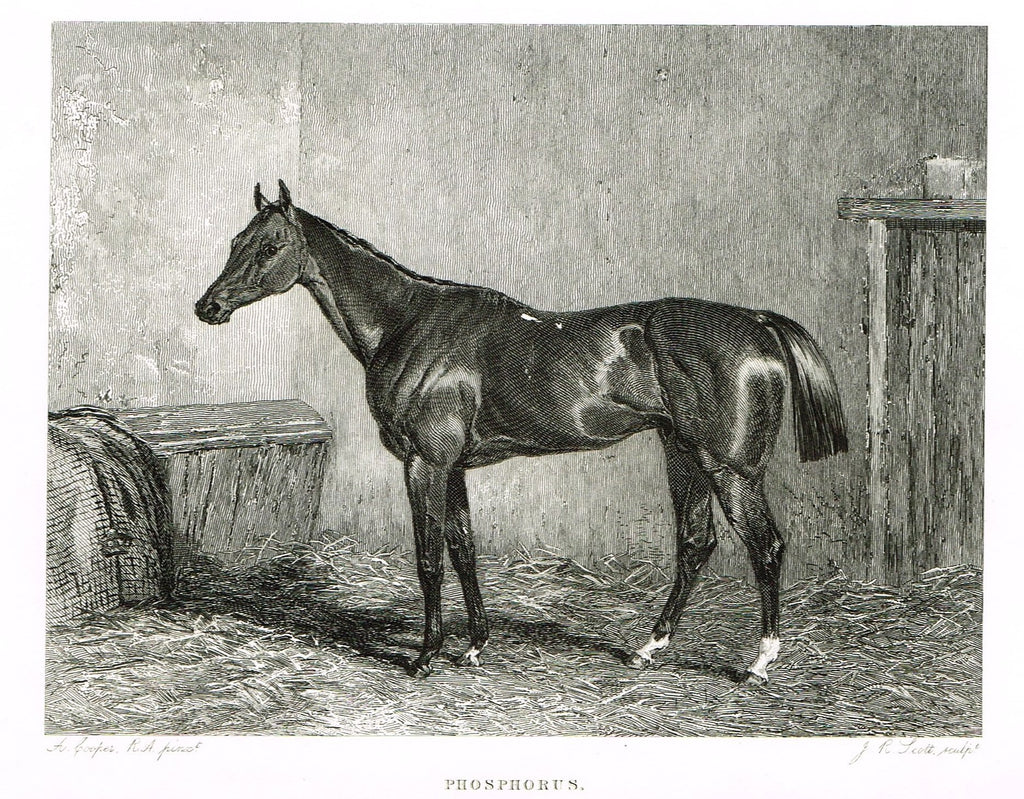 "Ackermann's Sporting Magazine - HORSES - ""PHOSPHORUS"" - Steel Engraving - c1838 - Sandtique-Rare-Prints and Maps"