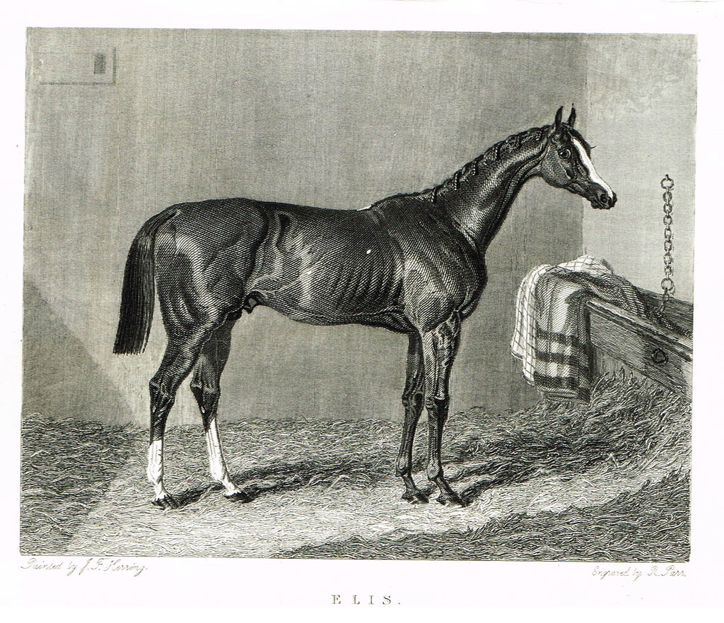 "Ackermann's Sporting Magazine - HORSES - ""ELIS"" - Steel Engraving - c1838 - Sandtique-Rare-Prints and Maps"