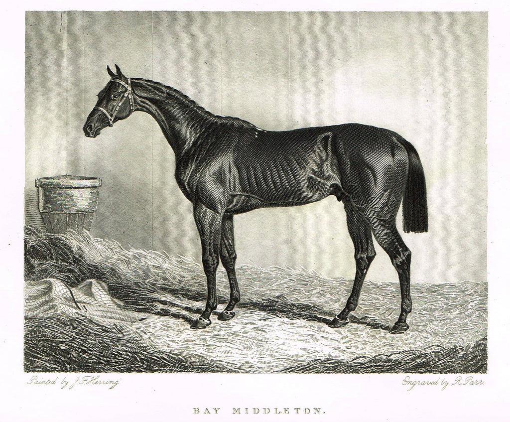 "Ackermann's Sporting Magazine - HORSES - ""BAY MIDDLETON"" - Steel Engraving - c1838 - Sandtique-Rare-Prints and Maps"