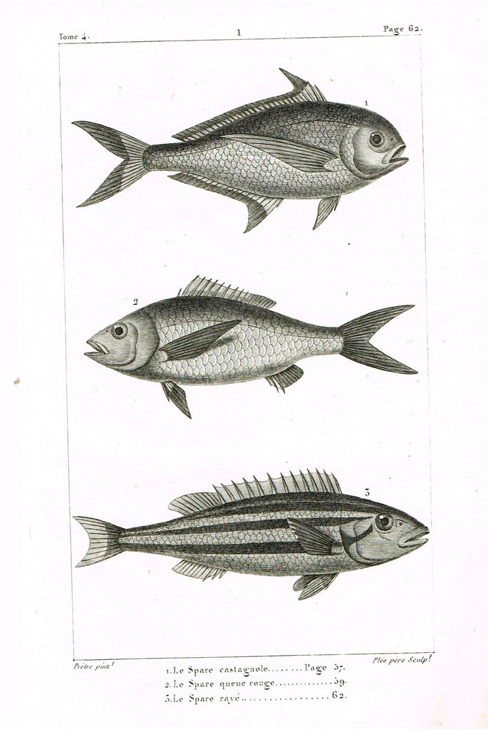 "Lacepede's Fish - ""LE SPACE CASTAGNOLE - Page 62"" by Pretre - Copper Engraving - 1833"