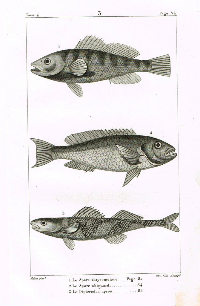 "Lacepede's Fish - ""LE SPARE CHRYSOMELANE - Plate 3"" by Pretre - Copper Engraving - 1833"