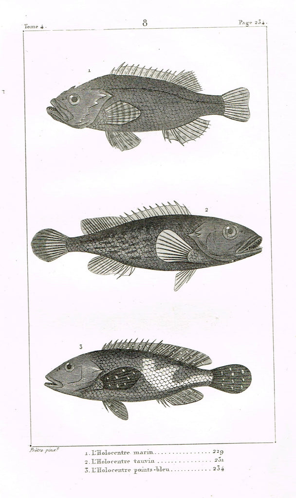 "Lacepede's Fish - ""L'HOLOCENTRE SOGO - Plate 8"" by Pretre - Copper Engraving - 1833"