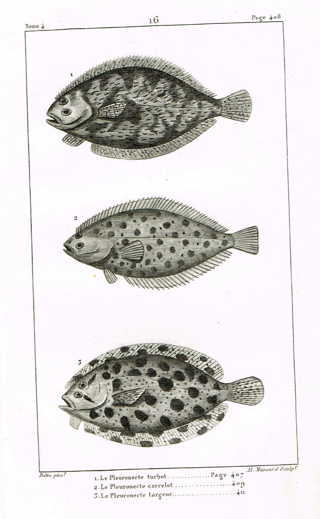 "Lacepede's Fish - ""LE PLEURONECTE TURBOT - Plate 16"" by Pretre - Copper Engraving - 1833"