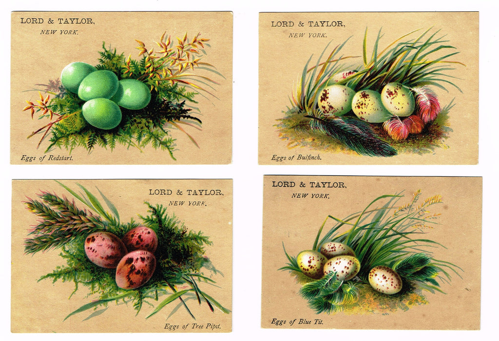 "Antique Ephemera - Lord & Taylor Advertising - ""FOUR BIRD EGG PRINTS"" - Chromolithograph - 1900"