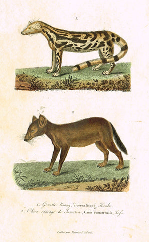 "Antique Animal Print - Buffon - ""GENETTE LISANG"" et ""CHIEN SAUVAGE"" Hand Colored Engraving - 1839"