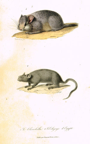 "Antique Animal Print - Buffon - ""LE CHINCHILLA"" et L'ECHYMYS D'EGYPTE"" Hand Colored Engraving - 1839"