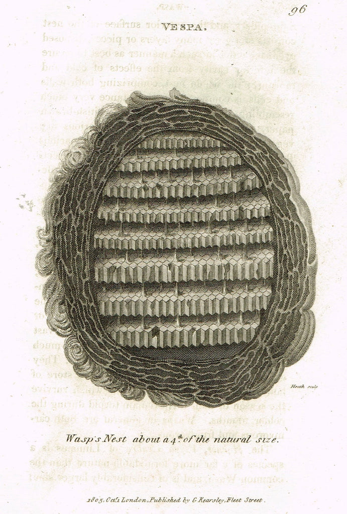 "Shaw's General Zoology - (Insects) - ""VESPA - WASP'S NEST"" - Copper Engraving - 1805"