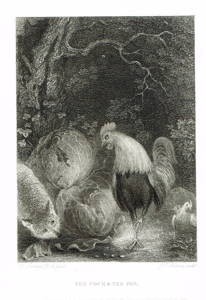 "Ackermann's Sporting Magazine - Birds & Hunting - ""THE COCK & THE FOX"" - Steel Engraving - c1838 - Sandtique-Rare-Prints and Maps"