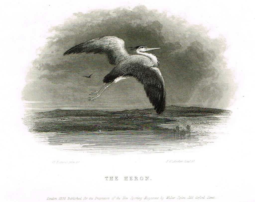 "Ackermann's Sporting Magazine - Birds & Hunting - ""THE HERON"" - Steel Engraving - c1838 - Sandtique-Rare-Prints and Maps"
