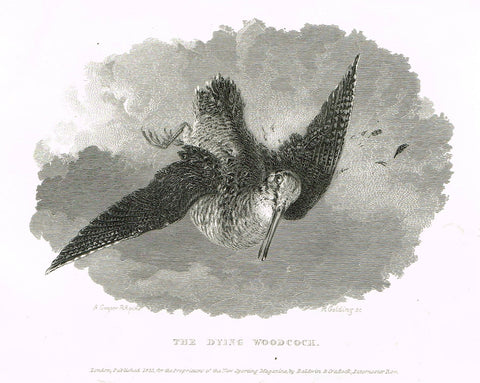 "Ackermann's Sporting Magazine - Birds & Hunting - ""THE DYING WOODCOCK"" - Steel Engraving - c1838 - Sandtique-Rare-Prints and Maps"