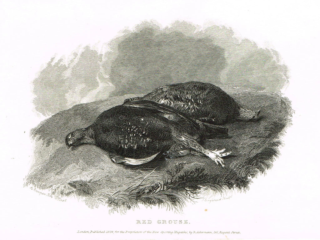 "Ackermann's Sporting Magazine - Birds & Hunting - ""RED GROUSE"" - Steel Engraving - c1838 - Sandtique-Rare-Prints and Maps"