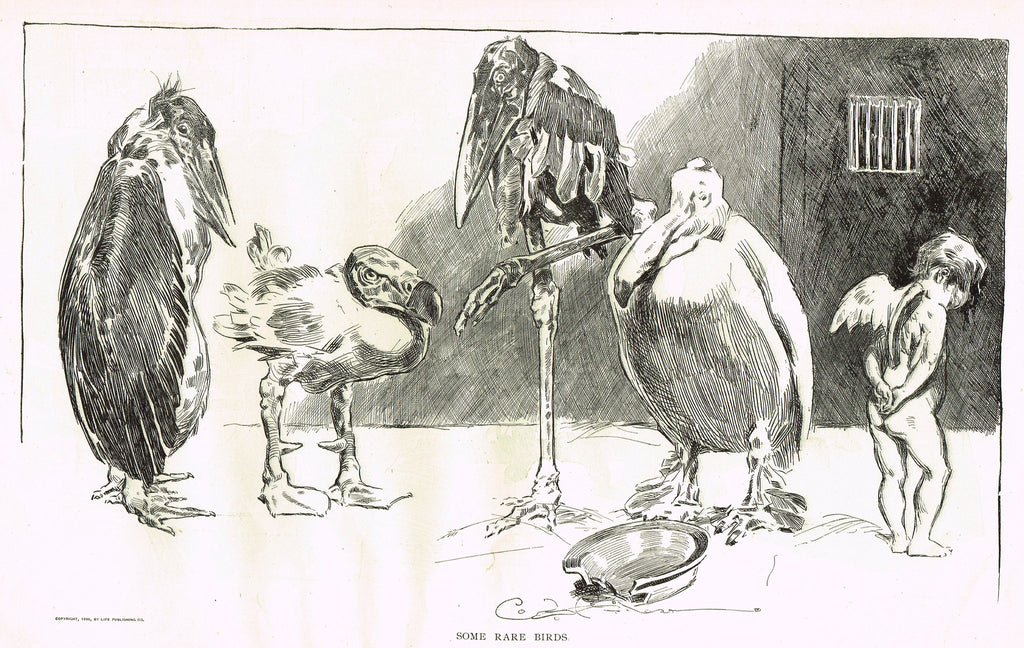 "Gibson Girl Sketch - ""SOME RARE BIRDS"" - Lithograph Sketch - 1907"