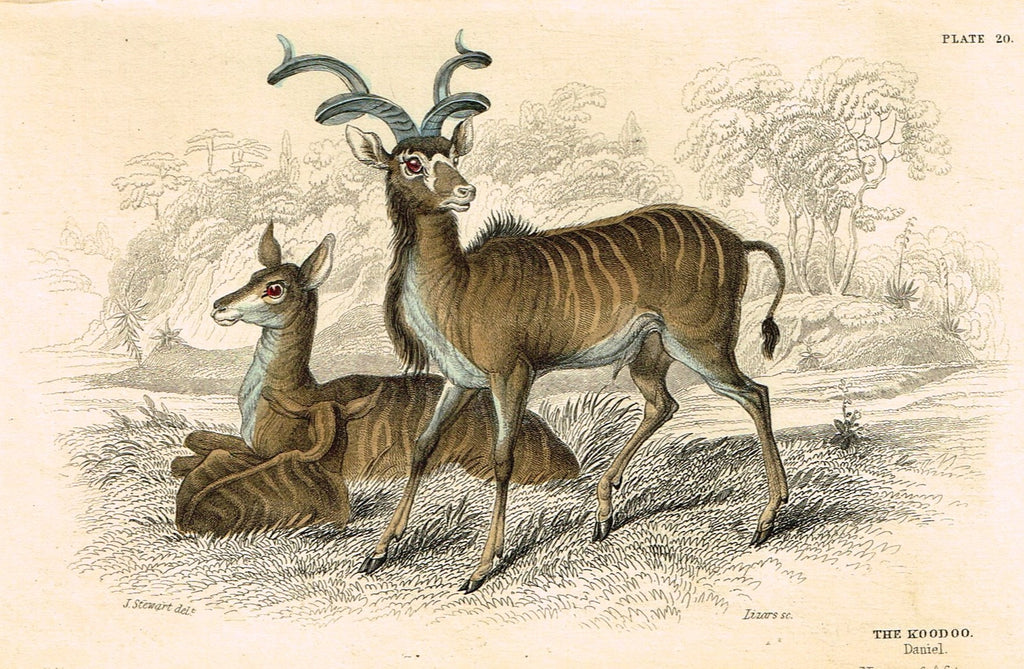"Jardine's Animals - ""THE KOODOO""  - Hand-Colored Engraving - 1833"