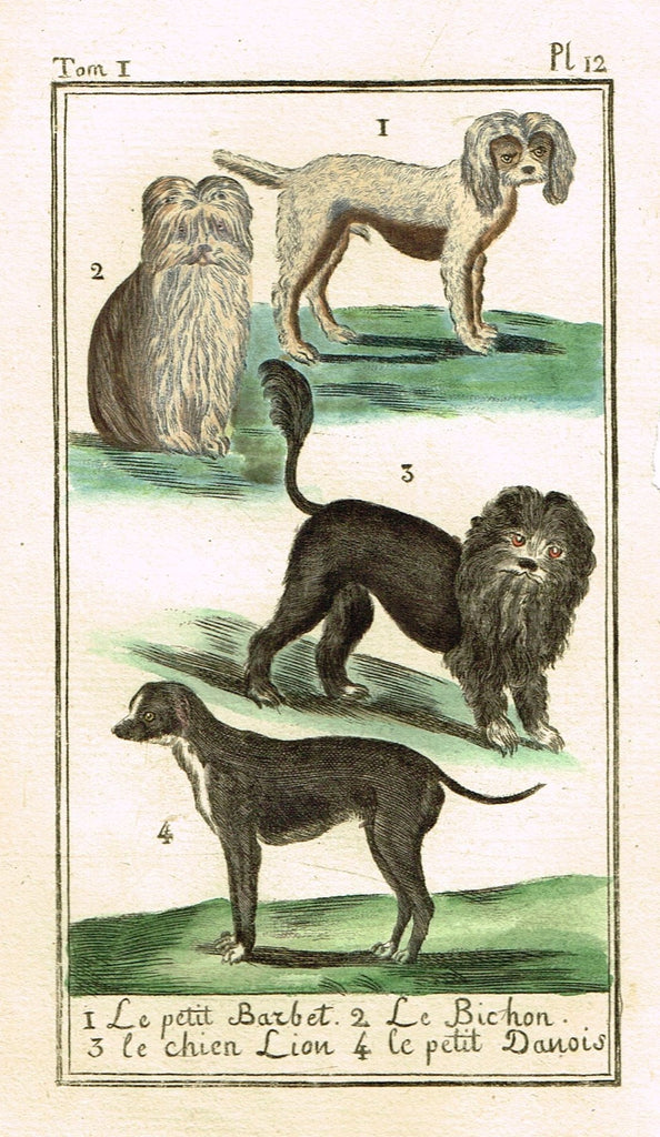 "Buffon's Histoire Naturelle - ""LE BICHON, BARBET & DANOIS (DOG VARIETIES)"" - Copper Engraving - 1799"