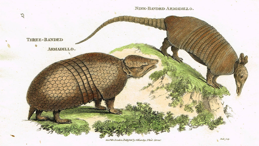 "Shaw's General Zoology - ""THREE-BANDED ARMADILLO"" - Copper Engraving - 1800"