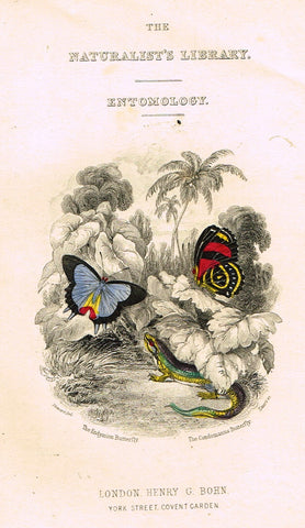 Jardine Butterfly Print - FRONTISPIECE - ENDIMION & CONDOMANUS - H-Col Engraving - 1833