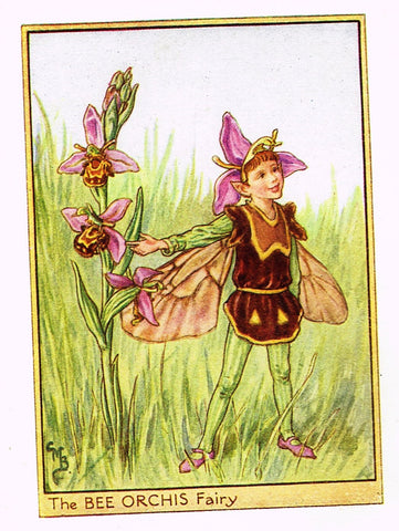 "Cicely Barker's Fairy Print - ""THE BEE ORCHIS FAIRY"" - Children's Lithogrpah - c1935"