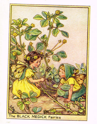 "Cicely Barker's Fairy Print - ""THE BLACK MEDICK FAIRIES"" - Children's Lithogrpah - c1935"