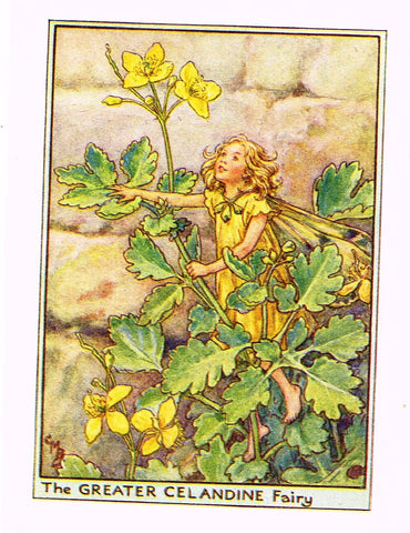 "Cicely Barker's Fairy Print - ""THE GREATER CELANDINE FAIRY"" - Children's Lithogrpah - c1935"