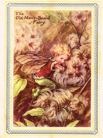 "Cicely Barker's Fairy Print - ""THE OLD MAN'S BEARD FAIRY"" - LARGE Children's Lithogrpah - c1955"
