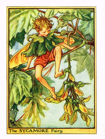 "Cicely Barker's Fairy Print - ""THE SYCAMORE FAIRY"" - Children's Lithogrpah - c1935"