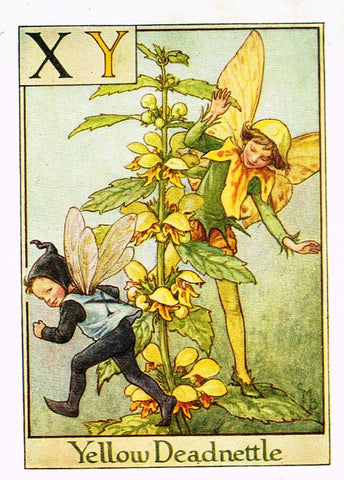 "Cicely Barker's Fairy Print - ""YELLOW DEADNETTLE"" - Children's Lithogrpah - c1935"