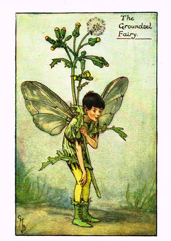 "Cicely Barker's Fairy Print - ""THE GROUNDSEL FAIRY"" - Children's Lithogrpah - c1935"