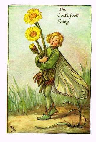"Cicely Barker's Fairy Print - ""THE COLT'S FOOT FAIRY"" - Children's Lithogrpah - c1935"