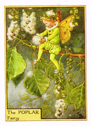 "Cicely Barker's Fairy Print - ""THE POPLAR FAIRY"" - Children's Lithogrpah - c1935"