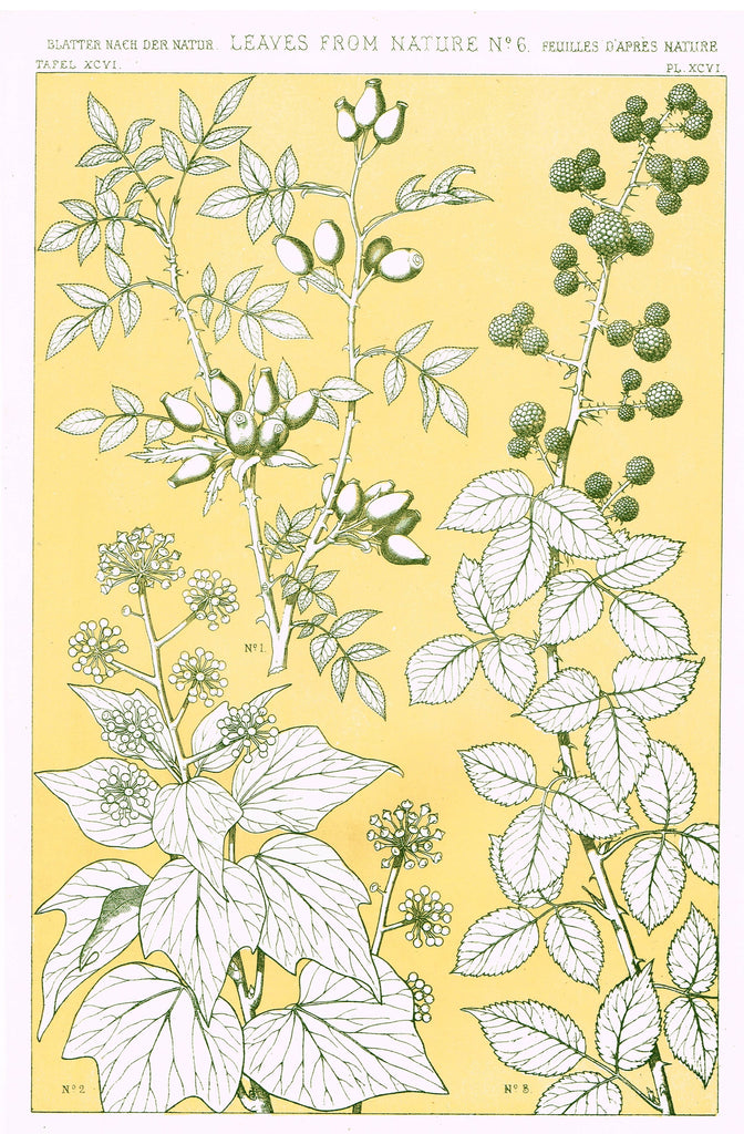 "Owen Jones Design - ""LEAVES FROM NATURE - No. 6"" - Chromo Lithogrpah - 1868"