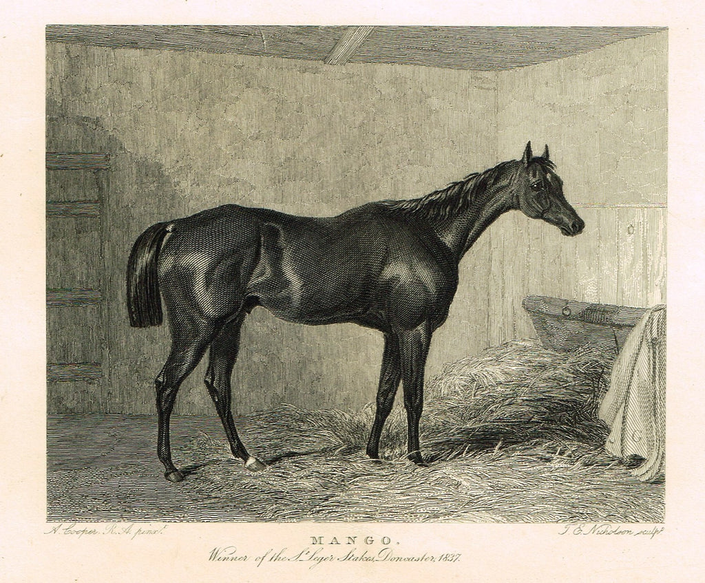 "Ackermann's Sporting Magazine - HORSES - ""MANGO"" - Steel Engraving - c1838 - Sandtique-Rare-Prints and Maps"