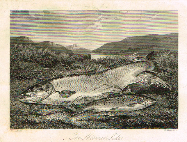 "Sporting Magazine - ""THE SHANNON SIDE"" (FISHING) - Engraving - c1865"