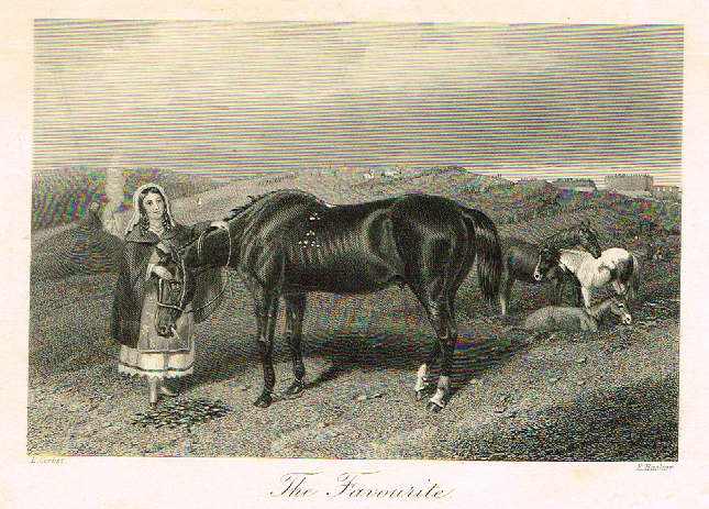 "Sporting Magazine - ""THE FAVORITE"" (HORSE RACING) - Engraving - c1865"