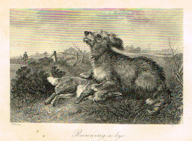 "Sporting Magazine - ""RUNNING A BYE"" - Engraving - c1865"