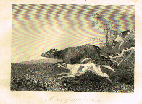"Sporting Magazine - ""A CASE OF REAL DISTRESS""  (HUNTING) - Engraving - c1865"