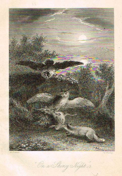 "Sporting Magazine - ""ON A SHINY NIGHT""  (HUNTING) - Engraving - c1865"