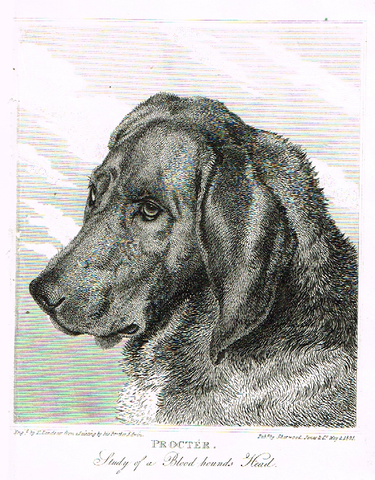 "Landseer's Dogs - ""PROCTER"" - Copper Engraving - 1828"