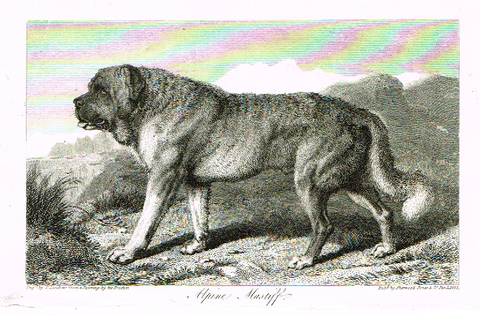 "Landseer's Dogs - ""ALPINE MASTIFF"" - Copper Engraving - 1825"