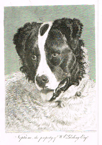 "Landseer's Dogs - ""NEPTUNE"" - Copper Engraving - 1825"