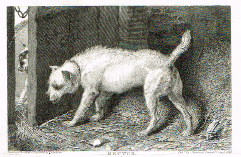 "Landseer's Dogs - ""BRUTUS"" - Copper Engraving - 1824"