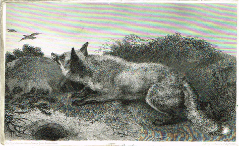 "Landseer's Dogs - ""FOX AFTER BIRDS"" - Copper Engraving - 1825"