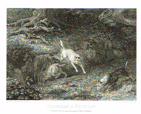 "Landseer's Dogs - ""TERRIERS & POLE CAT"" - Copper Engraving - 1825"