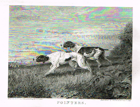 "Landseer's Dogs - ""POINTERS"" - Copper Engraving - 1825"