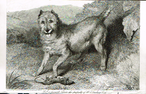 "Landseer's Dogs - ""BOB, A FAVORITE TERRIER"" - Copper Engraving - 1825"